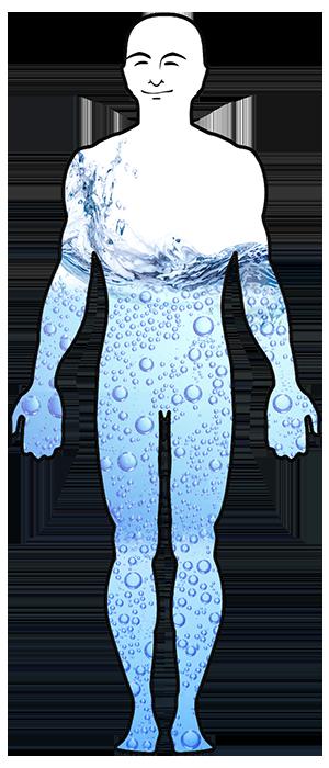 vattnets funktion i kroppen